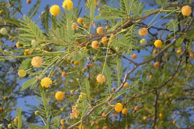 La tusca y sus más de diez propiedades curativas