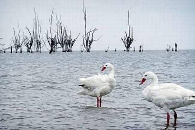 Ansenuza: La leyenda de la diosa india del agua y la maravilla actual de la Laguna de Mar Chiquita