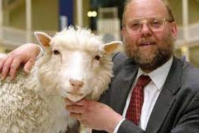 Qué fue de Dolly la oveja clonada?  Se cumplieron 25 años del nacimiento