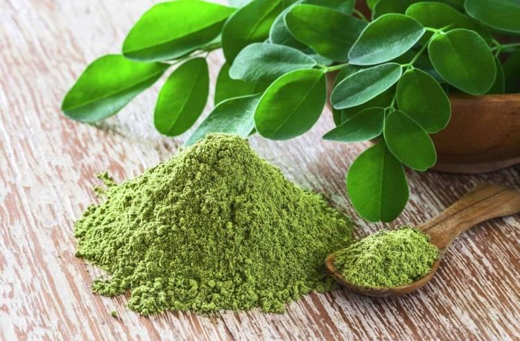 La Moringa: la hierba con múltiples beneficios para la salud