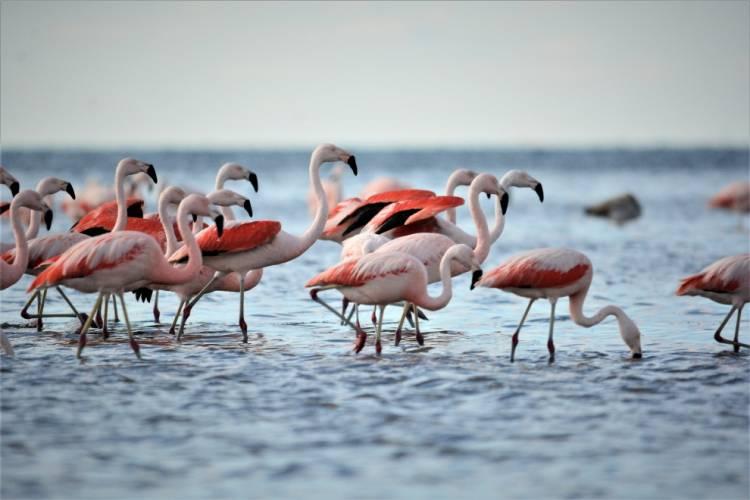 Los flamencos: parte de la identidad del Mar de Ansenuza