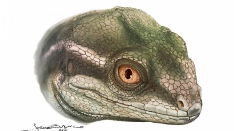 Hallanel cráneo y la mandíbula de unejemplar, considerado el antepasado de los reptiles modernos